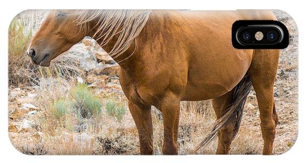 Wild Palomino Stallion IPhone Case