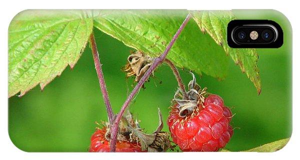 Wild Raspberries IPhone Case