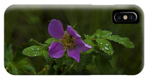 Wild Rose In Rain IPhone Case