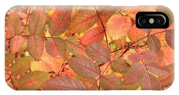 Wild Rose Leaves In Autumn IPhone Case