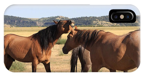 Wild Spanish Stallion In Charge IPhone Case