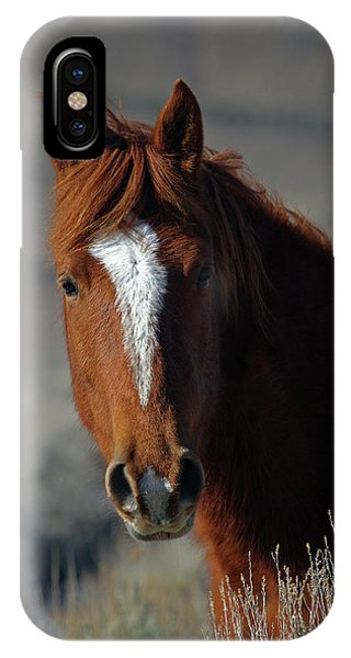 Wild Stallion IPhone Case