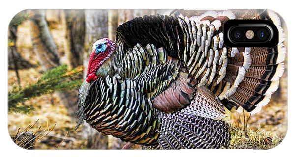 Wild Turkey IPhone Case