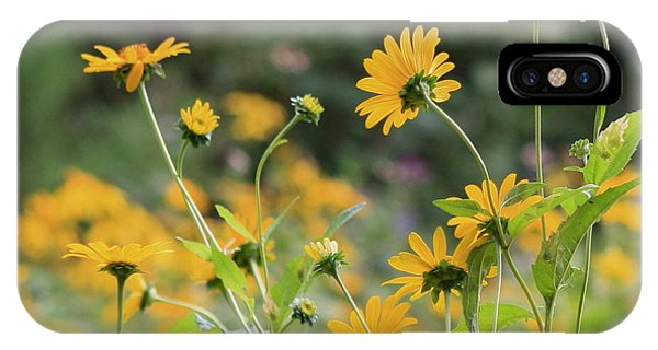 Wildflowers 2013 IPhone Case