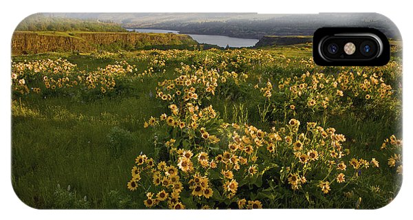 Wildflowers At Dawn On The Columbia Gorge IPhone Case