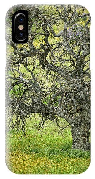 Wildflowers Under Oak Tree - Spring In Central California IPhone Case