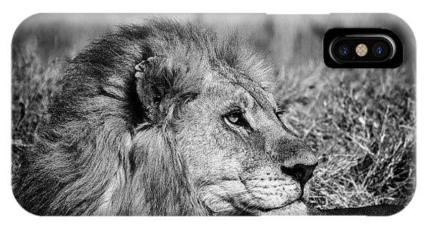 Wildlife Lion IPhone Case