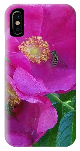 iPhone Case - Wildrose by Peter Norden