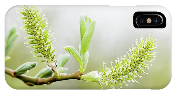 Willow Catkins (salix Sp.) Phone Case by Gustoimages/science Photo Library