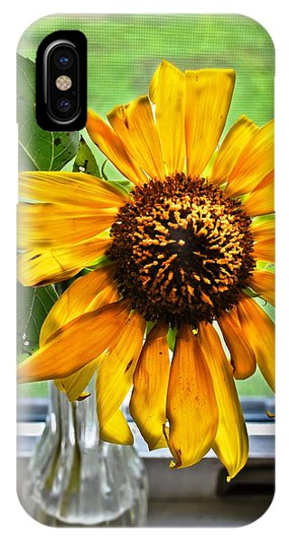 Wilting Sunflower In Window IPhone Case