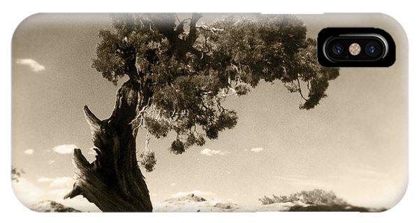 Needles iPhone Case - Wind Swept Tree by Scott Norris