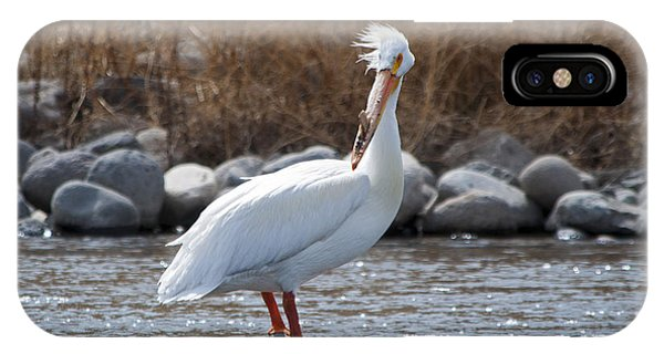 Windblown Pelican On A Rock IPhone Case