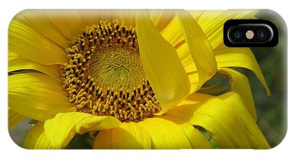Windblown Sunflower One IPhone Case