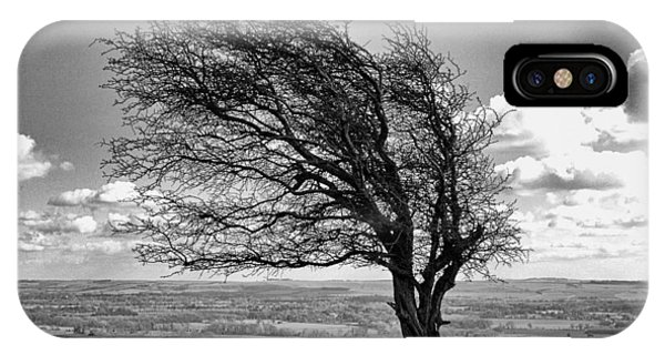 Windswept Tree On Knapp Hill IPhone Case