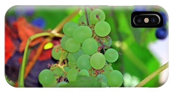 Wine Beginnings IPhone Case