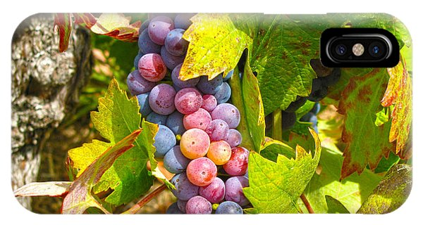 Wine Grapes II IPhone Case