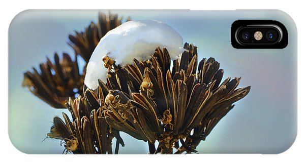 Winter Agave Bloom IPhone Case