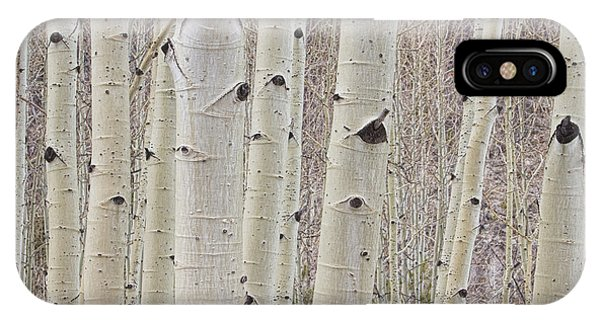 Winter Aspen Tree Forest IPhone Case