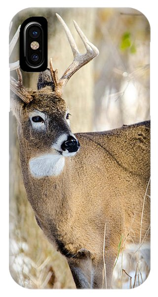 IPhone Case featuring the photograph Winter Buck by Steven Santamour
