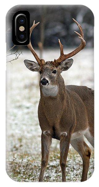 Winter Buck IPhone Case