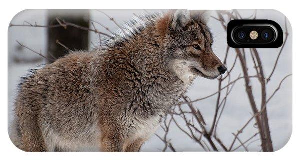 Winter Coyote IPhone Case