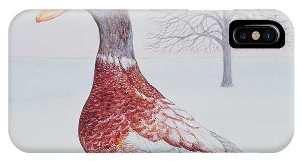 Mallard iPhone Case - Winter Drake by Ditz