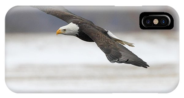 Winter Eagle IPhone Case