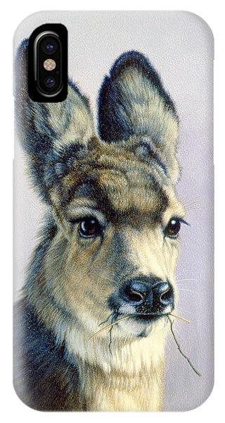 Mule Deer iPhone Case - Winter Forage-fawn by Paul Krapf