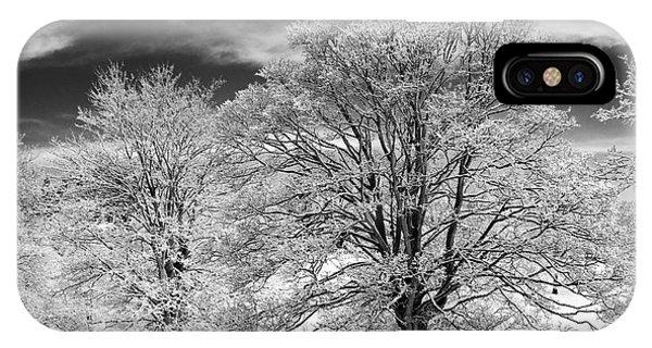 Winter Horse Chestnut Trees Monochrome IPhone Case
