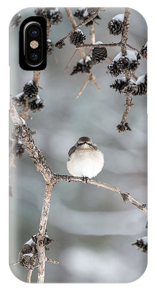 Winter Mockingbird IPhone Case
