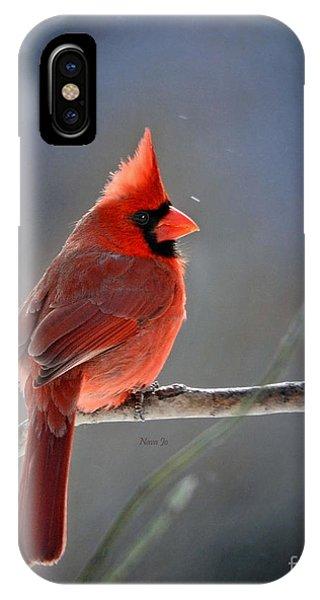 Winter Morning Cardinal IPhone Case