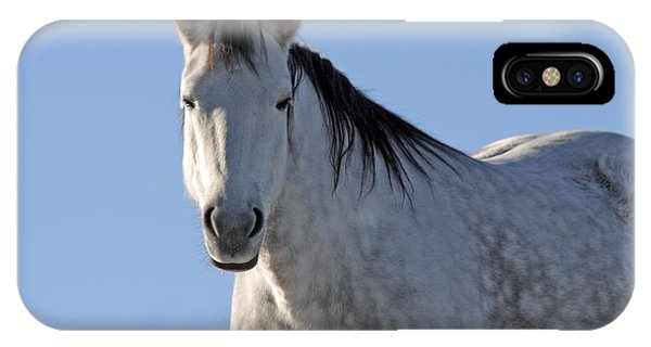 Winter Pony IPhone Case