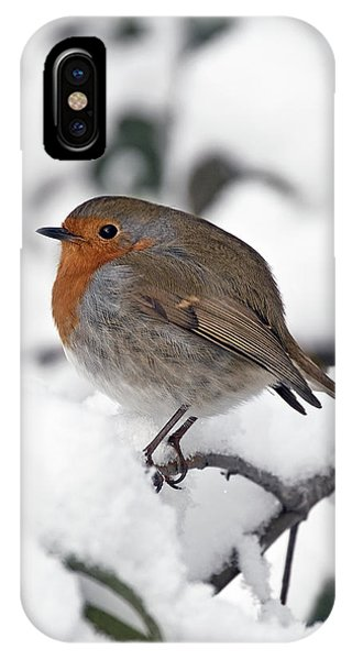Winter Robin IPhone Case