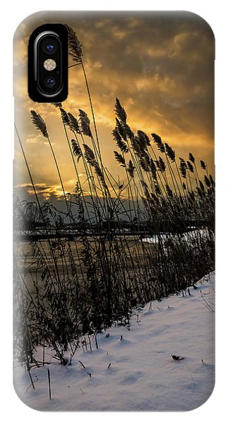 Winter Sunrise Through The Reeds IPhone Case