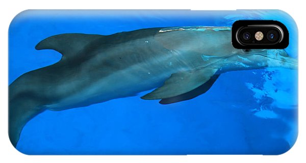 Winter The Dolphin IPhone Case