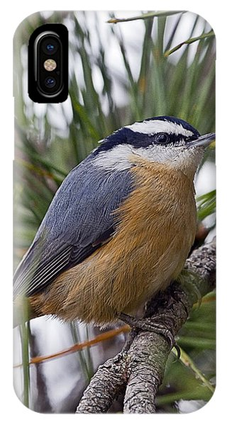Winter Visitor - Red Breasted Nuthatch IPhone Case