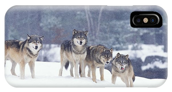 Winter Wolf Pack IPhone Case