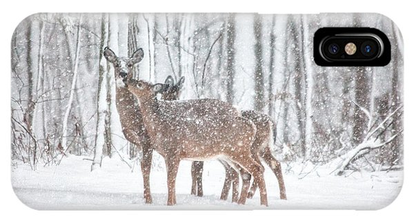 White Tailed Deer iPhone Case - Winters Love by Karol Livote