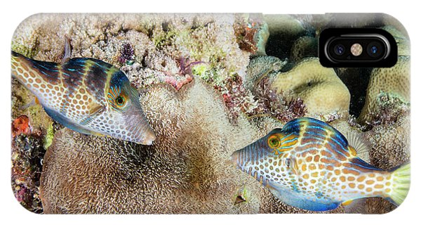 Behaviour iPhone Case - Wire-net Filefish Mating Display by Louise Murray