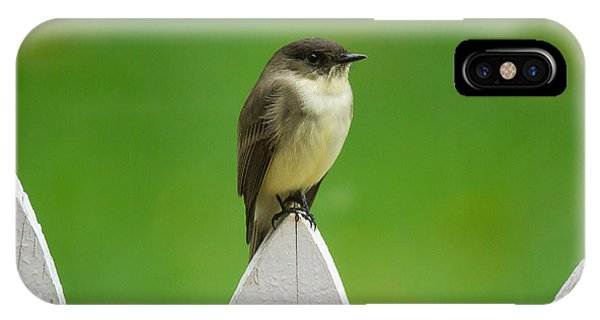 IPhone Case featuring the photograph Wish I Was The Twitter Bird by Robert L Jackson