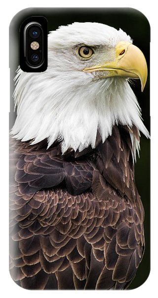 Avian iPhone Case - With Dignity by Dale Kincaid
