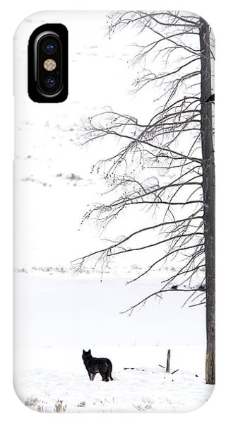 Wolf And The Raven IPhone Case