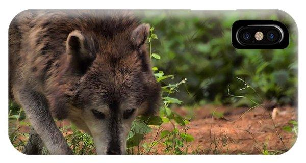 Wolf Phone Case by Frank Piercy