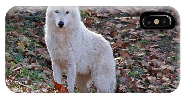 Wolf In Autumn IPhone Case