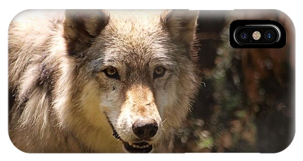 Wolf Intently Phone Case by Frank Piercy