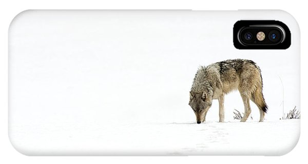 Wolf Journey IPhone Case