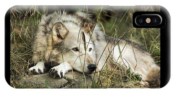 Wolf Symbol Of IPhone Case