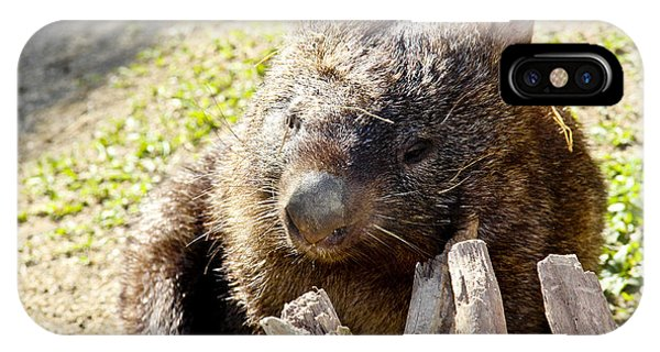 IPhone Case featuring the photograph Wombat Scratching by Debbie Cundy