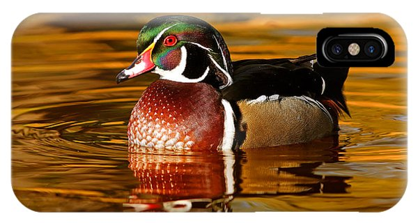 Wood Ducks iPhone Case - Wood-drake On The Golden Light by Mircea Costina Photography
