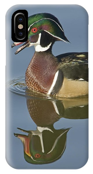 Wood Ducks iPhone Case - Wood Duck Aix Sponsa Floating On Water by Animal Images